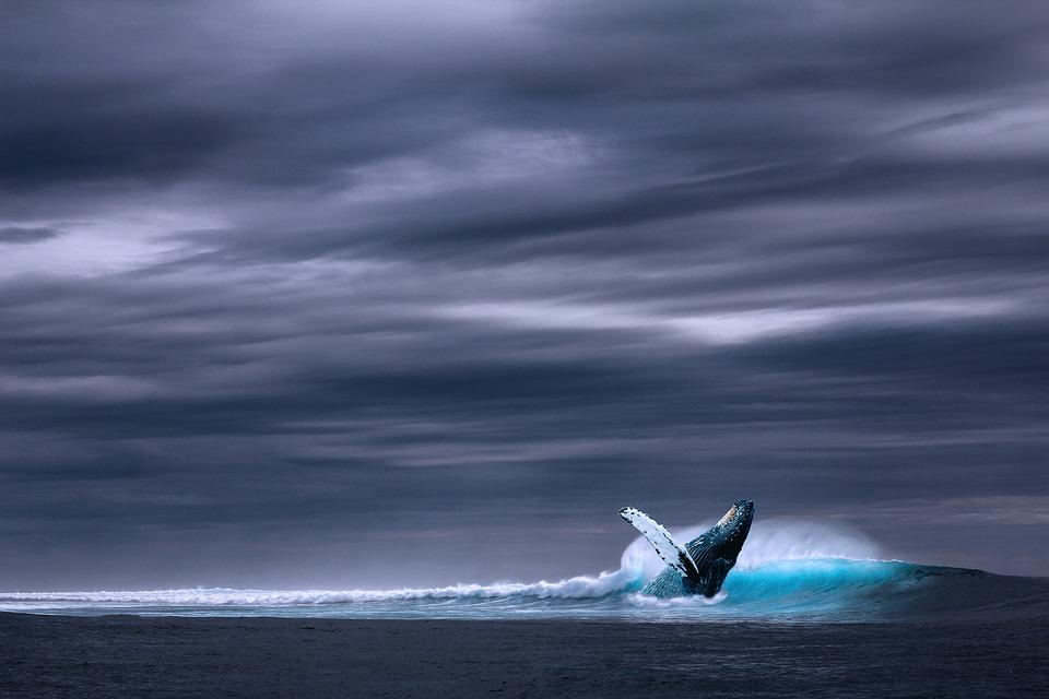 desarrollo sostenible: Los océanos